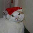 サンタ帽のメル