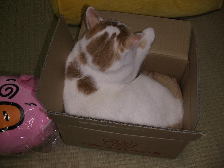 箱が気に入った