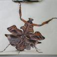 カレハカマキリ、描きました。