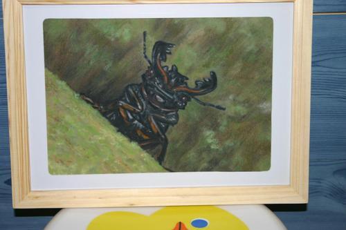 タランドゥス、描きました。