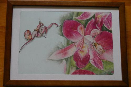 ランの花とハナカマキリ